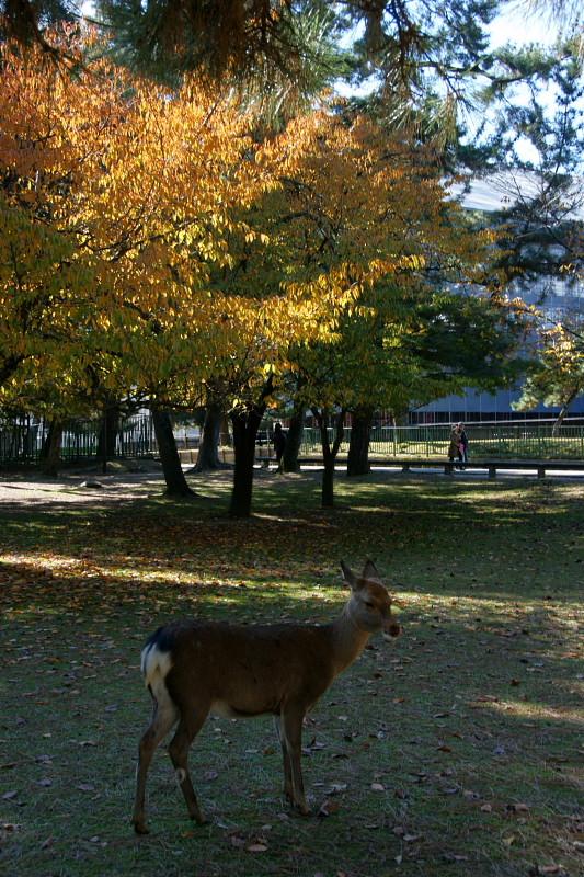 Nara0119